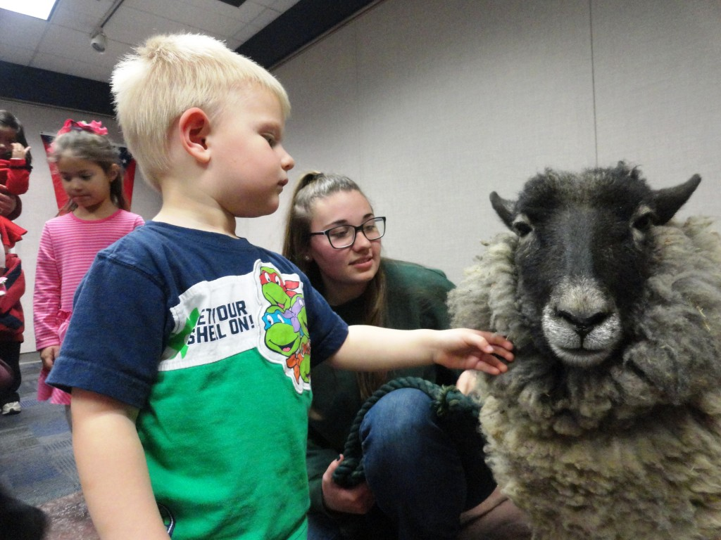 Connor greets Leonard, one of the sheep from Lake Metroparks Farmpark.