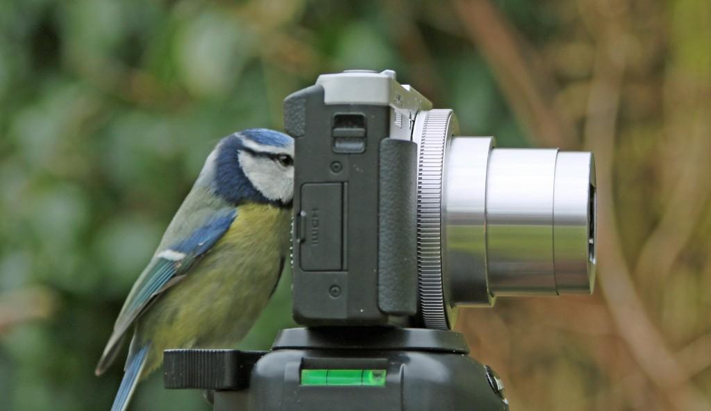 Birdwatching: So easy a bird can do it.