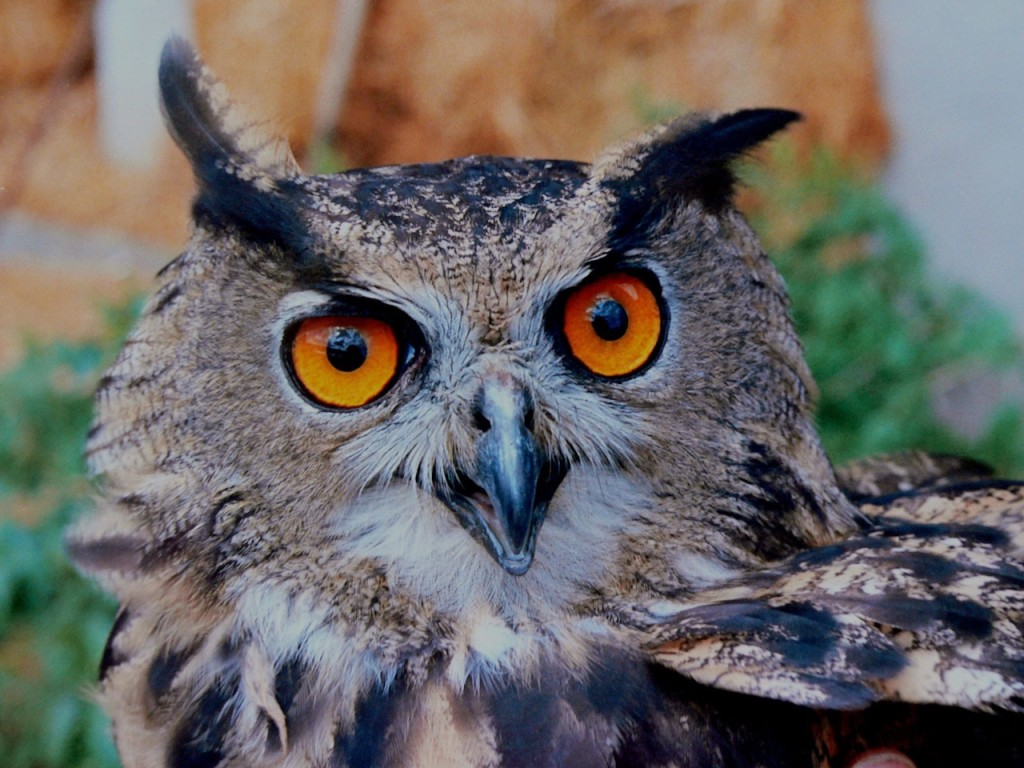 Kids can meet and learn about nocturnal animals during a special program at Mentor Public Library.