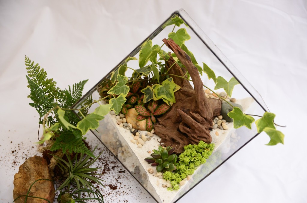 Kids can learn how to make their own terrariums on Saturday, March 10, at our Lake Branch.