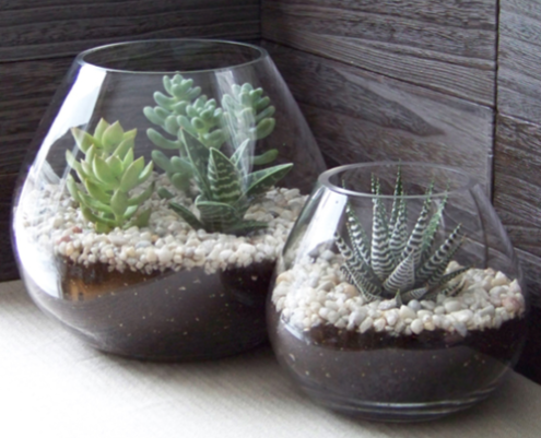 Make your own succulent terrarium on Tuesday, May 29, at Mentor Public Library.