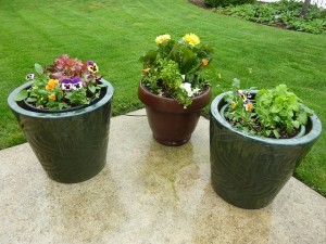 Three containers/pots with flowers inside.