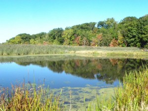 The Newhous Pond in Mentor Marsh after the foliage has started to turn for the season.