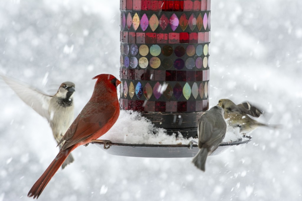 Kids can make bird-feeders this Saturday at our Headlands Branch.