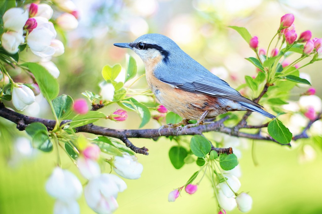 Learn how and where you can start birding with the experts at Lake Metroparks.