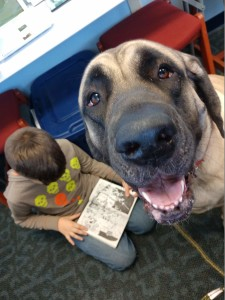 Miss Marlee and other trained therapy dogs await your young reader at Paws to Read.