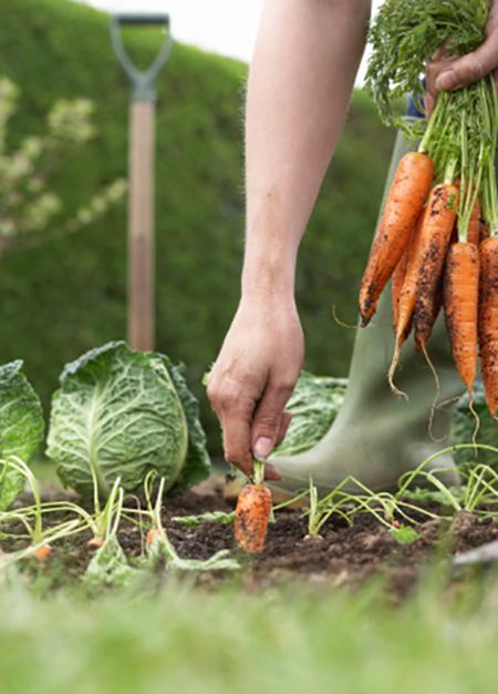 Image of a garden