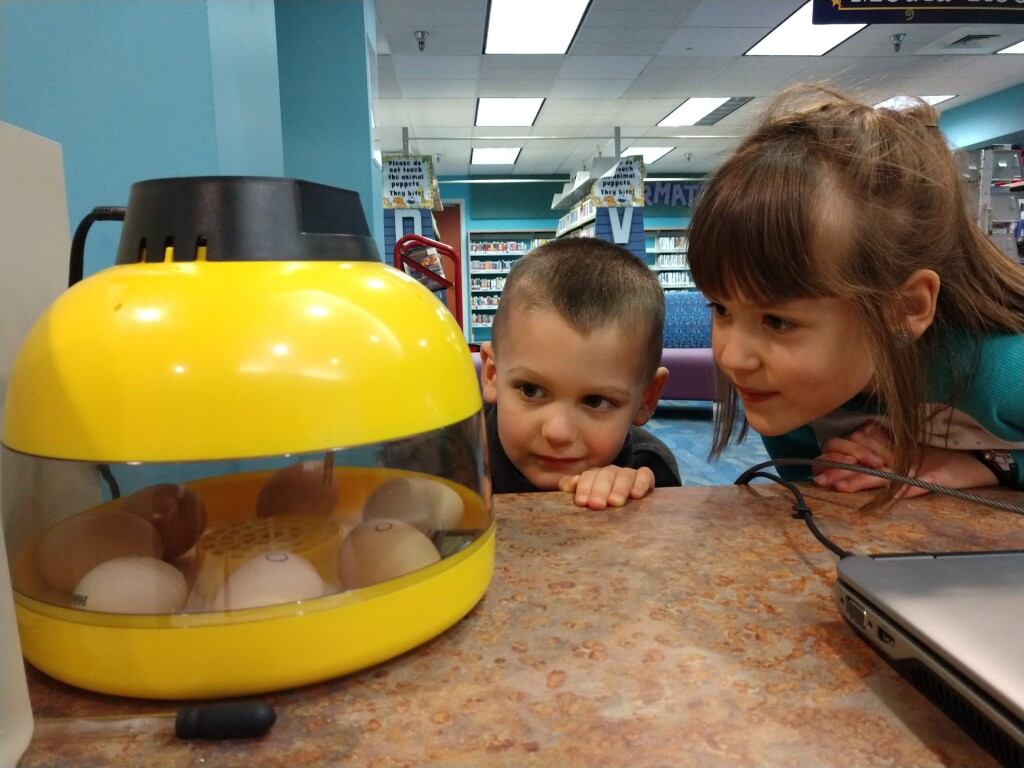 Have an egg-cellent time checking in on the chickies at our Main Branch.