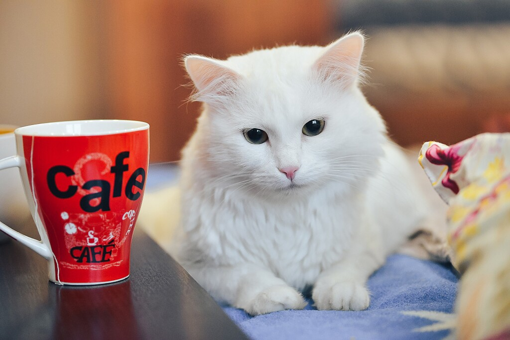 You and your pets can join our Pet Cafe on