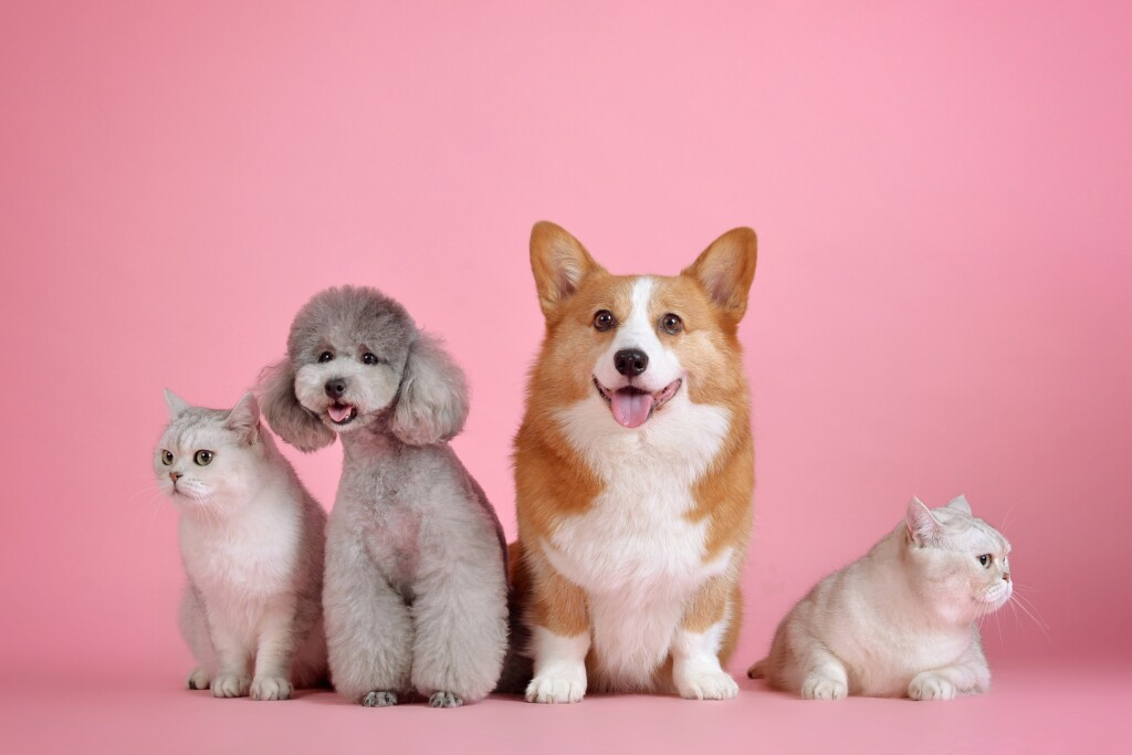 Join the online Pet Parade from Mentor Public Library on